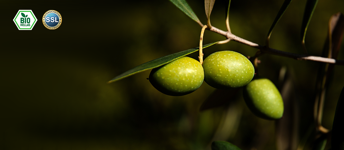 Feinste Oliven aus Bio Plantagen